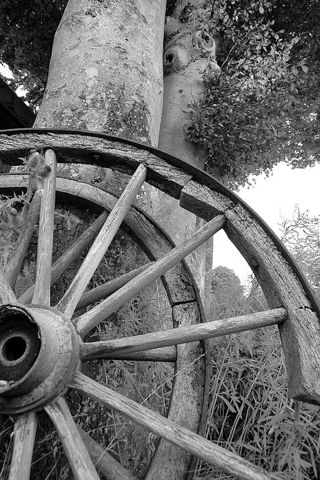Wagon Wheels Print by Robert Lacy