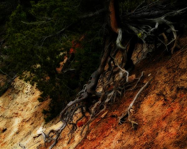 Walking Tree Print By Katie Lasalle Lowery