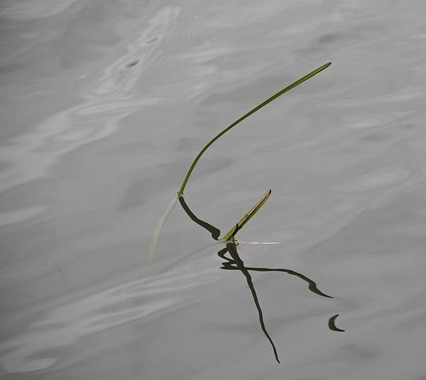 Odd Jeppesen - Water Music