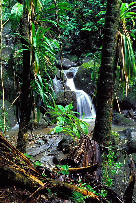 Waterfall El Yunque National Forest Mirror Image Print by Thomas R Fletcher