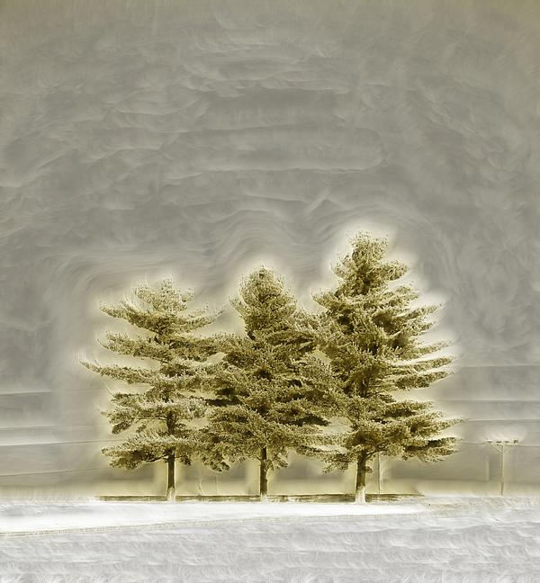 We Three Trees Print by Bill Tiepelman