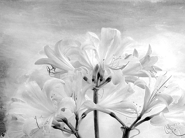 White Lillies Print by Marsha Heiken