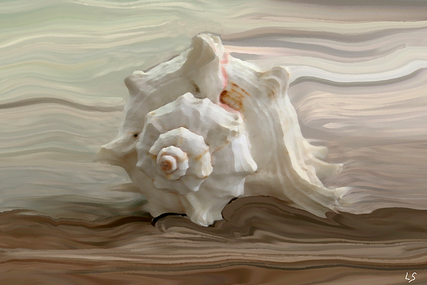 White Shell Print by Linda Sannuti