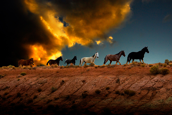 Wild Horses At Sunset Print by Harry Spitz