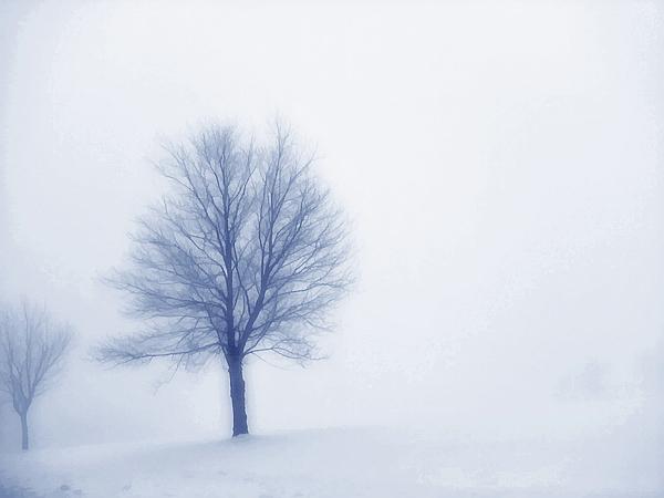 Winter Blues Print by Randy Steele