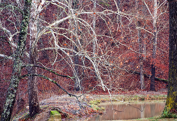 Winter In Arkansas Print by Fred Lassmann