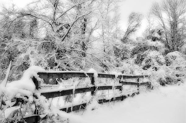 Winter Scene Print by Kathy Jennings