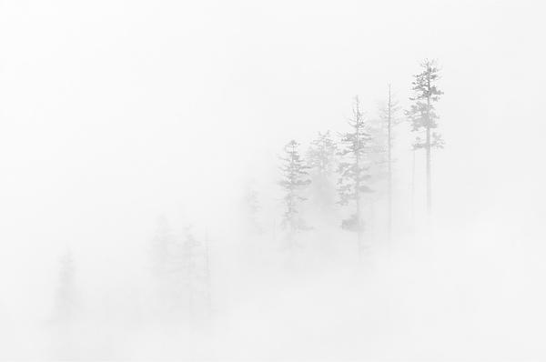 Winter Veil Print by Mike  Dawson