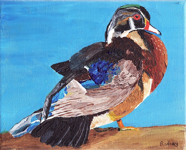 Wood Duck Print by Rodney Campbell