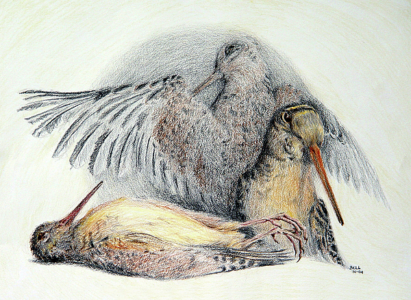Woodcock Print by Betsy Gray