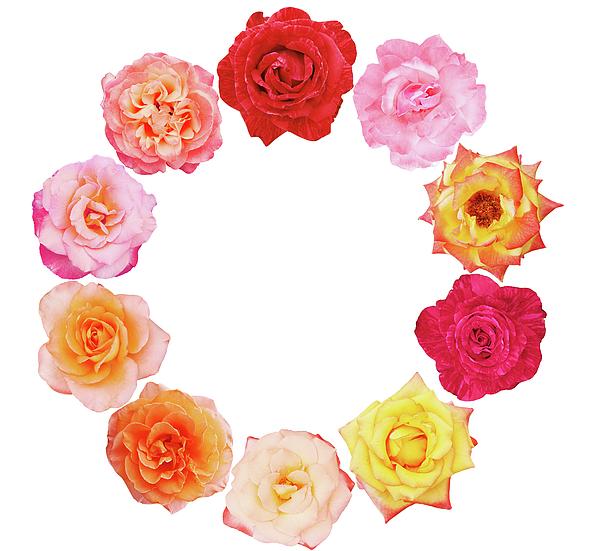 Iuliia Malivanchuk - Wreath of roses
