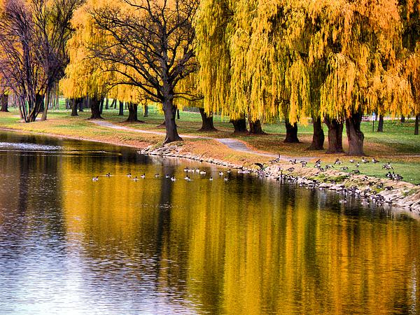 Yellow Autumn Print by Scott Hovind