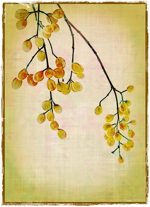 Yellow Berries Print by Judi Bagwell
