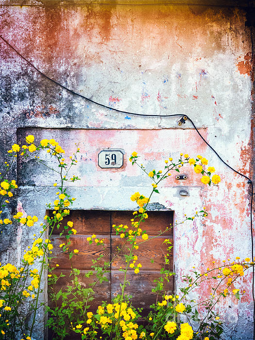 Silvia Ganora - Yellow flowers and decayed wall