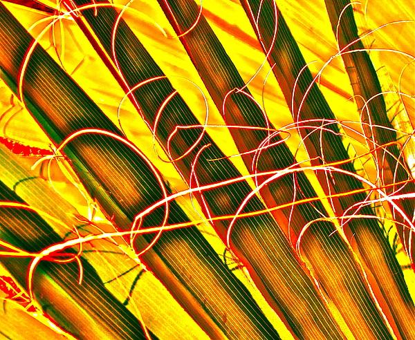 Yellow Palm Fun Print by Gwyn Newcombe