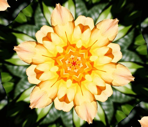 Yellow Rose Kaleidoscope  Print by Cathie Tyler