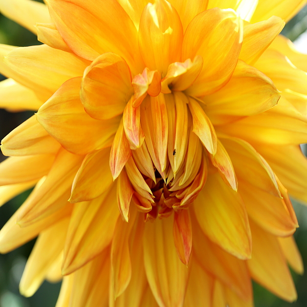 Christiane Schulze Art And Photography - Yellow Sun - Duvet Covers