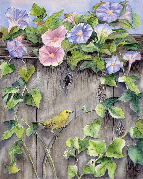 Yellow Warbler And Morning Glory Print by Patricia Pushaw