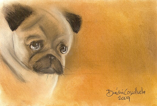 Zooey The Pug Print by Dindin Coscolluela