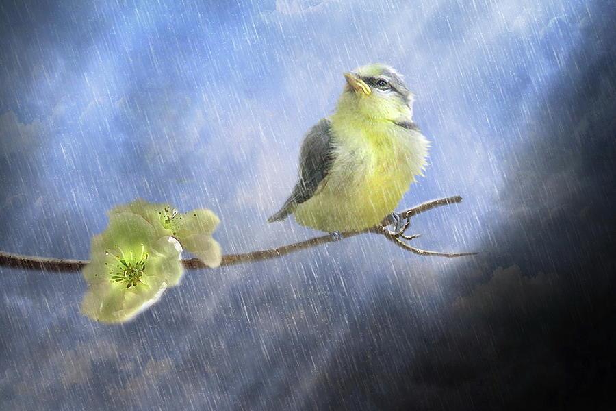 Bird Digital Art -  Little Sunshowers by Trudi Simmonds