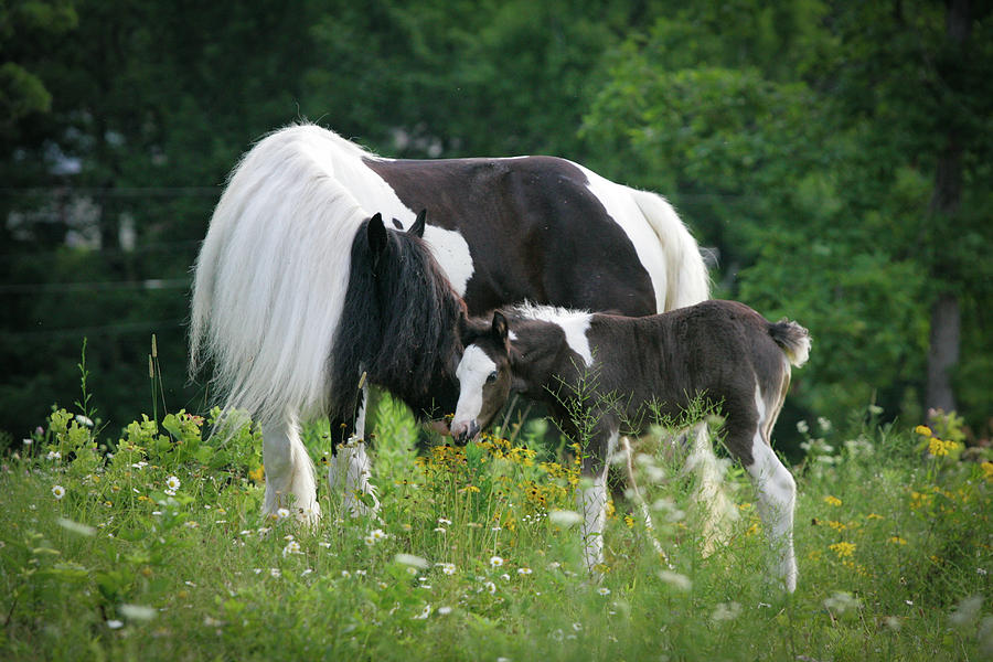 Gypsy Photograph - A Mothers Love by Laurie Comfort