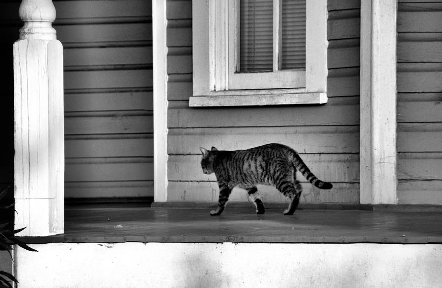 Animals Photograph - Across The Porch by Jan Amiss Photography
