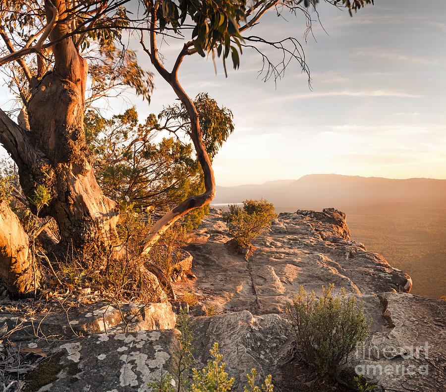 Australian Bush Landscape is a photograph by Tim Hester which was ...