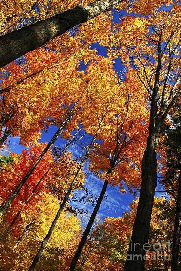 Autumn Photograph - Autumn Forest by Elena Elisseeva