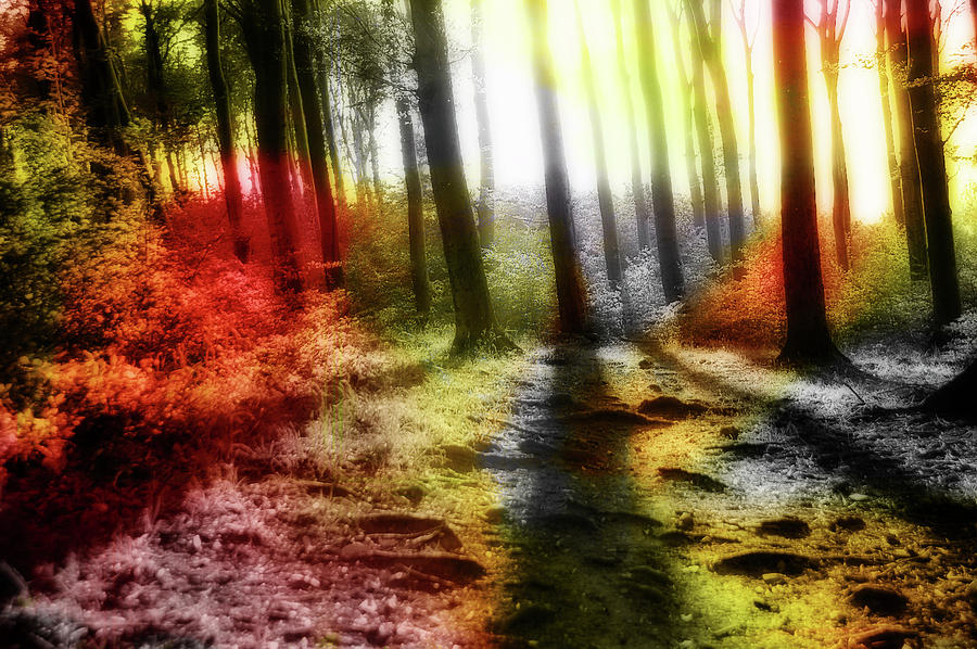 Colorful Forest Photograph