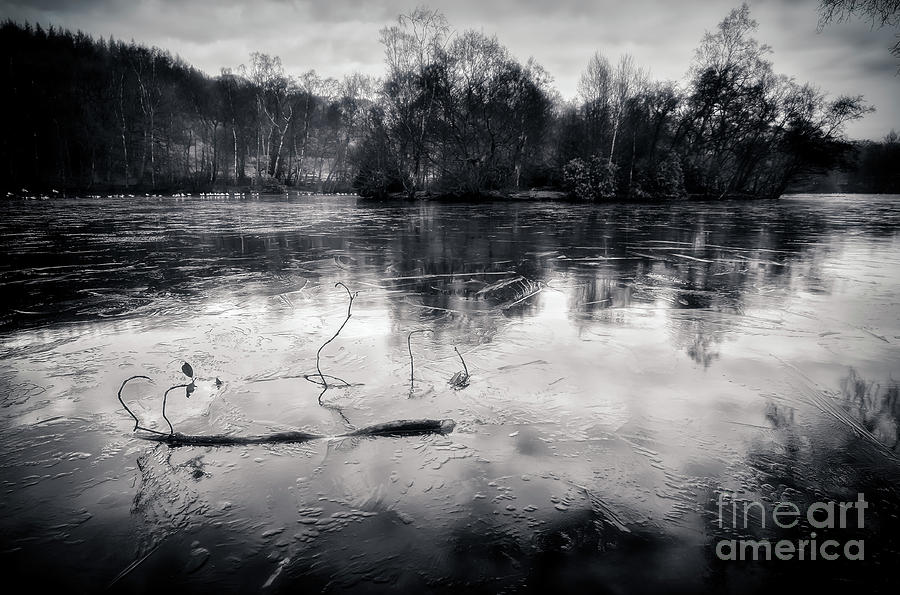 Coppice Pond Photograph