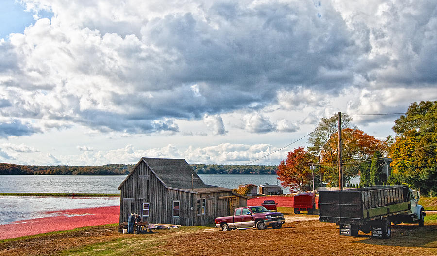 Cape Cod Photograph - Cranberry Farming by Gina Cormier