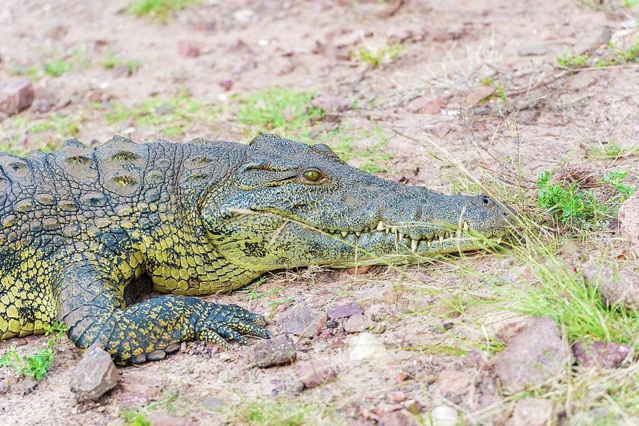 summary of alligator bayou