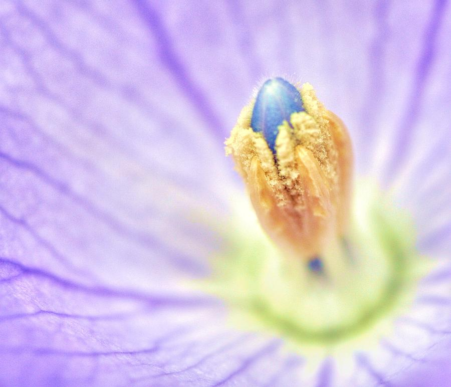 Flower Photograph - Dream by Mitch Cat
