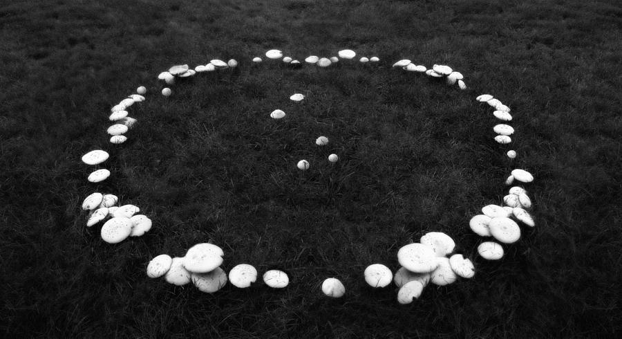 Mushrooms Photograph - Fairy Ring by Mark Wagoner