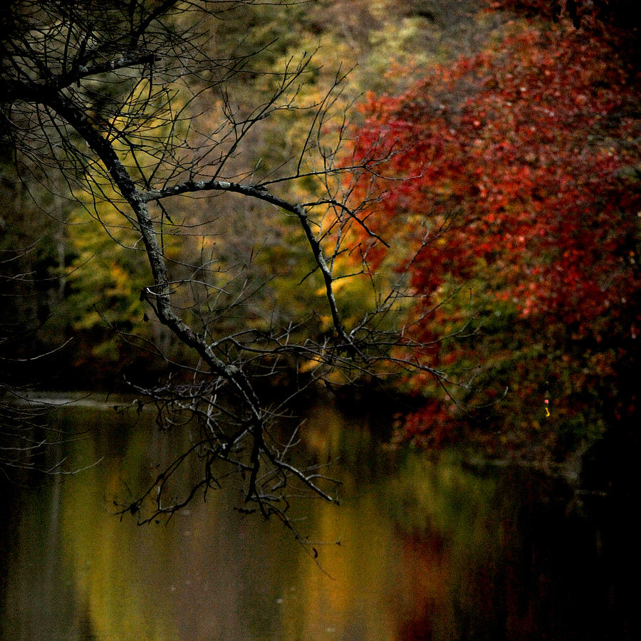 Fall Photograph - Fall by Frank DiGiovanni