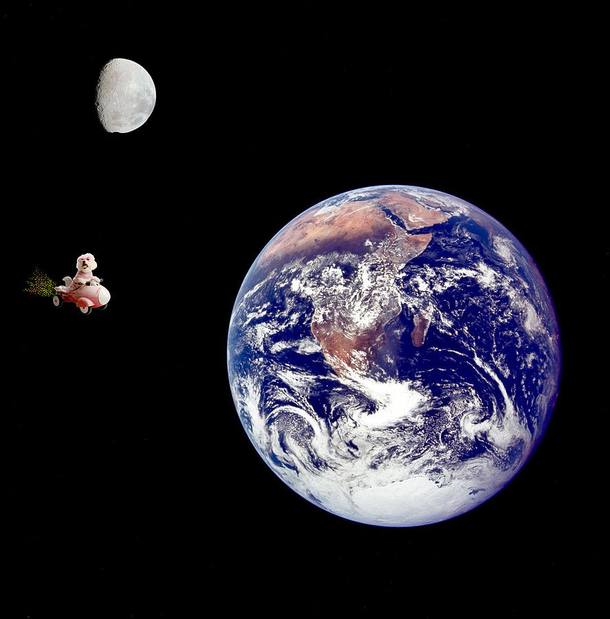 Fifi Goes To The Moon Photograph by Michael Ledray