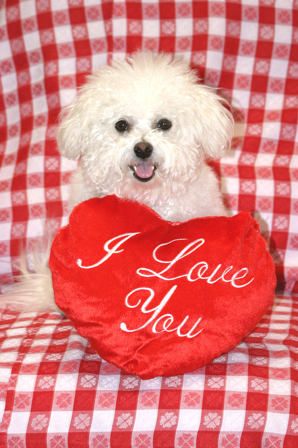 Animal Photograph - Fifi Loves You by Michael Ledray