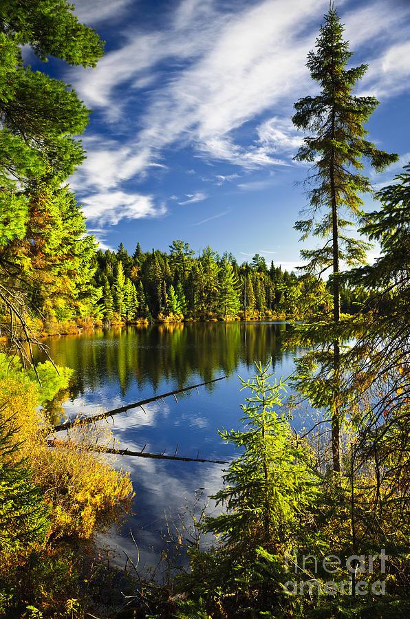 Lake Photograph - Forest And Sky Reflecting In Lake by Elena Elisseeva