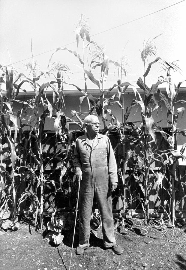 Corn Photograph - Giant Corn Man by Gerhardt Isringhaus