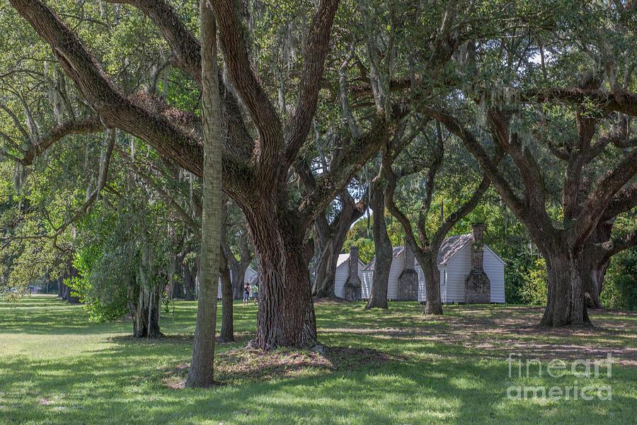Mcleod Gullah Heritage Photograph