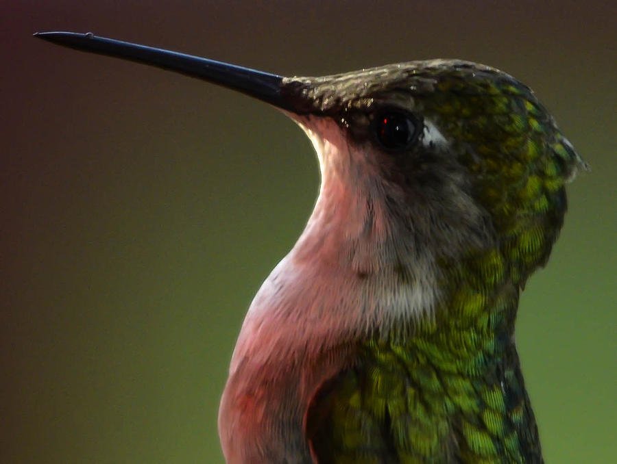 Photograph - Hummingbird by Brian Stevens