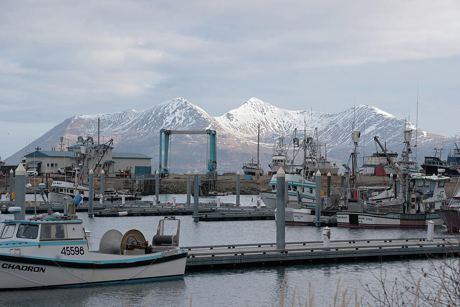 King Cove Harbor  Alaska Photograph
