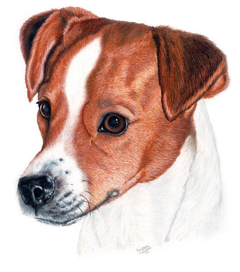 Jack Russell Terrier Drawing - Lewie by Kristen Wesch