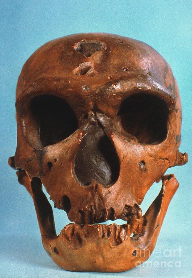 Ancient Photograph - Neanderthal Skull by Granger