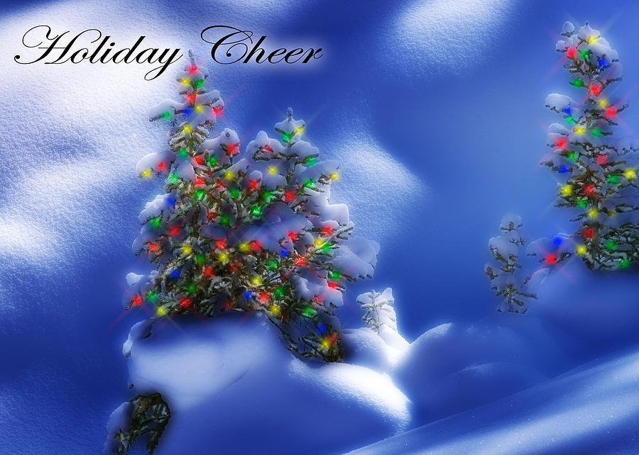 Christmas Lights Photograph - Outdoor Christmas Trees by Utah Images