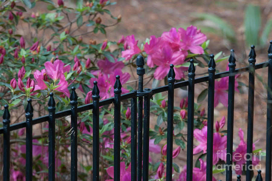Over The Fence Photograph