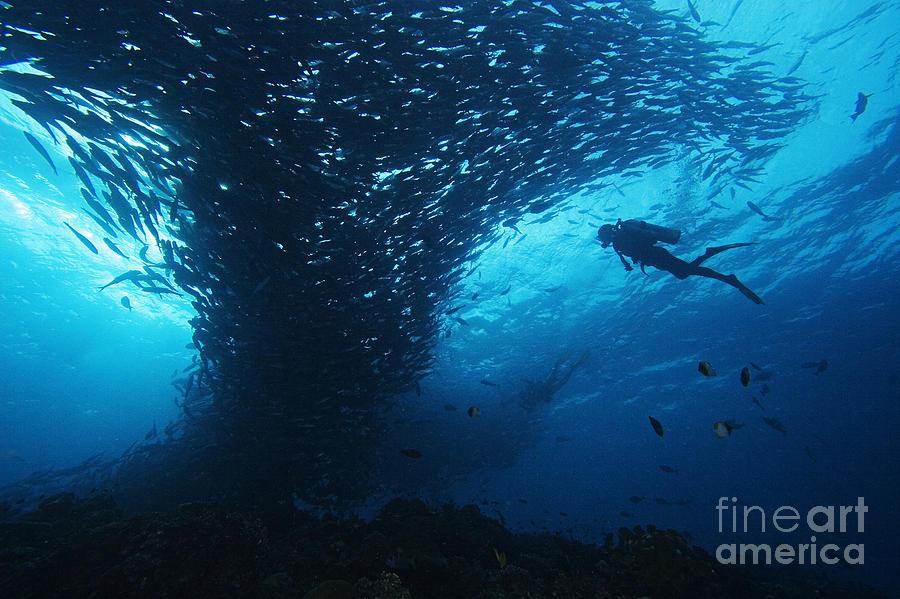 Animal Art Photograph - Palau, Diving by Dave Fleetham - Printscapes