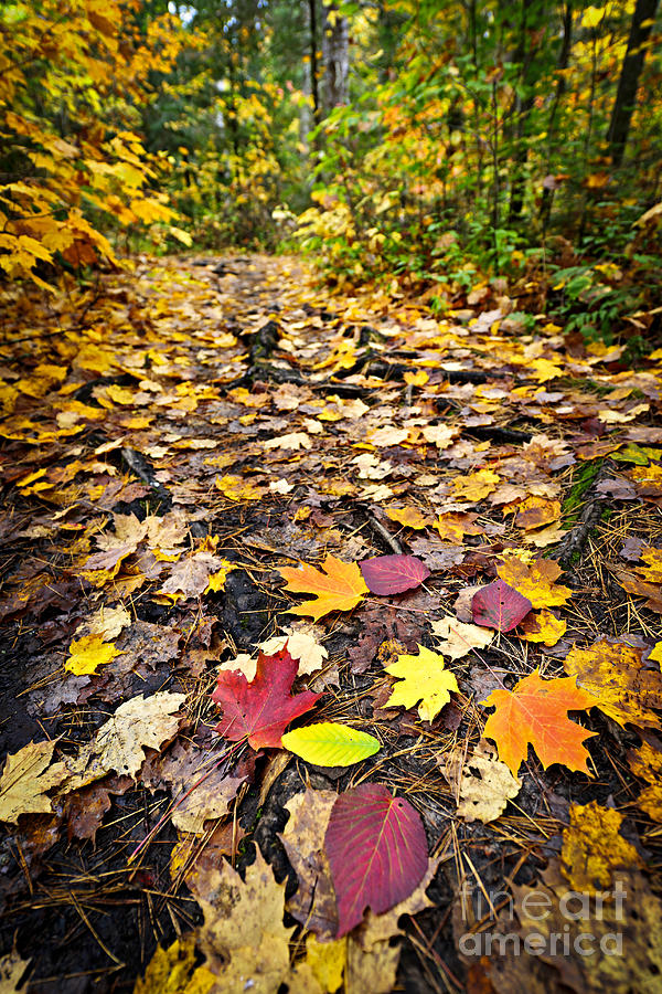 Autumn Photograph - Path In Fall Forest by Elena Elisseeva