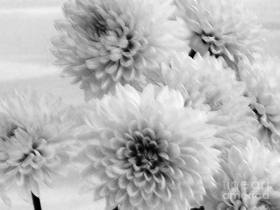 Pretty Petals Photograph