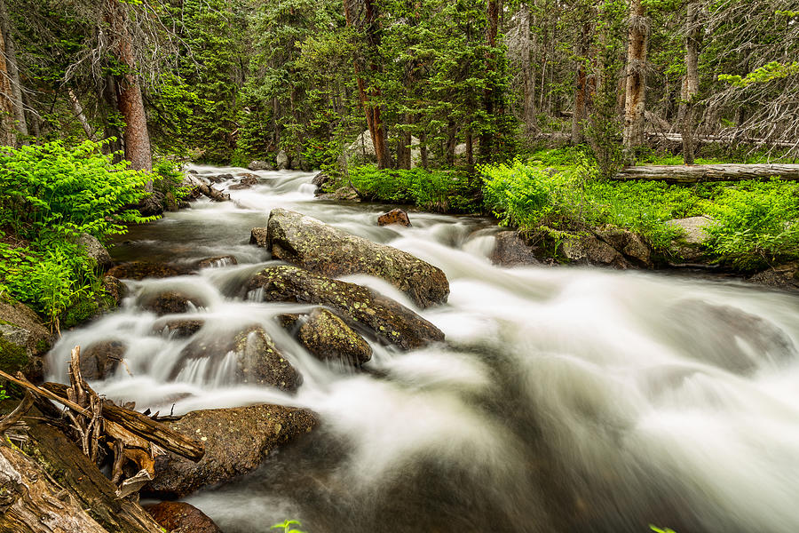 Roosevelt National Forest Stream Photograph